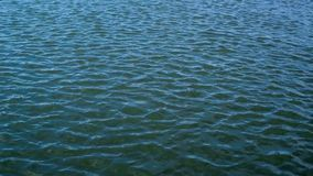 Abstract water ripple. Stock Images