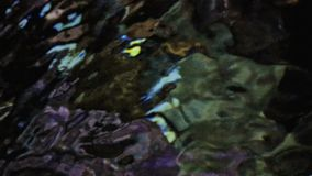 Abstract water ripples. In large salt water tank stock video