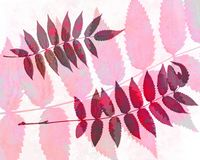 Abstract watercolor background and rowan leaves. Mixed media Royalty Free Stock Photography