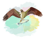 Abstract watercolor draw of eagle soaring in sky with prey fish Royalty Free Stock Photography