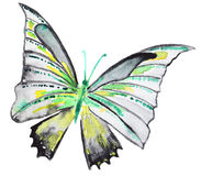Abstract Watercolor hand drawn butterfly Royalty Free Stock Images