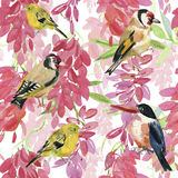 Abstract watercolor hand painted backgrounds with birds and flowers, Stock Images