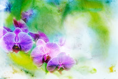 Abstract watercolor illustration of blossom phalaenopsis orchid. Royalty Free Stock Images