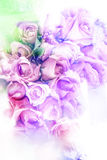 Abstract watercolor illustration of blossom rose. Royalty Free Stock Image