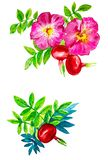 Abstract watercolor illustration of rosehip flowers and berries with leaves. Isolated on white background vector illustration
