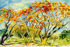 Abstract watercolor landscape original painting colorful of peacock flowers tree Royalty Free Stock Photography