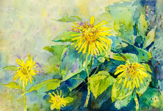 Abstract watercolor original painting colorful of sun flowers. And green leaves in sky background Royalty Free Illustration