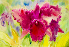 Abstract watercolor original painting purple pink color of orchid. Flower and green leaves background Royalty Free Stock Photography