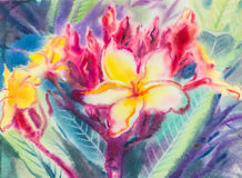 Abstract watercolor original painting purple,yellow color of  Frangipani Stock Image
