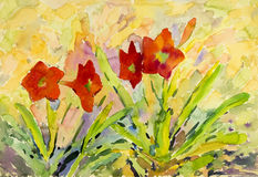 Abstract watercolor original painting red color of  amaryllis flowers. And green leaves in sky background Royalty Free Stock Images