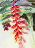 Abstract watercolor original painting red color of heliconia flower. Abstract watercolor original painting red color of heliconia flower and green leaves in sky Stock Image