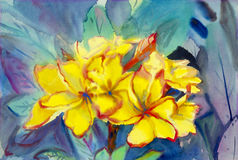 Abstract watercolor original painting yellow color of desert rose Royalty Free Stock Images
