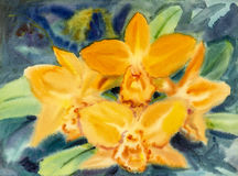 Abstract watercolor original painting yellow color of orchid flower. And green leaves in blue background Stock Images