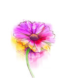 Abstract watercolor painting red gerbera, daisy flower vector illustration