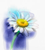 Abstract watercolor painting white gerbera, daisy flower Royalty Free Stock Photos