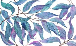 Abstract watercolor pattern with eucalyptus leaves on white background Stock Images