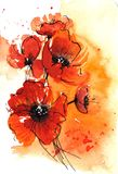 Abstract watercolor poppies Stock Image