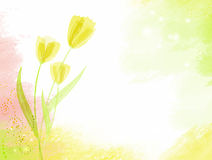 Abstract watercolour background with tulips Stock Image