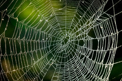 Abstract Web in bos Royalty-vrije Stock Foto's