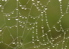 Abstract web and dew Stock Image