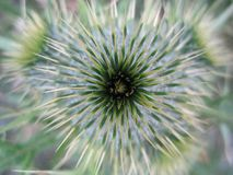 Abstract of Weed Flower royalty free stock images