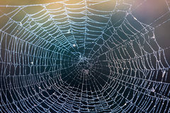 Abstract wet web Stock Image