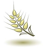 Abstract wheat. On white background Stock Photos