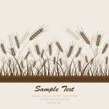 Abstract wheat background. Illustration grass Royalty Free Stock Photography