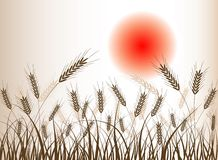 Abstract wheat background. Illustration ears Stock Image