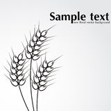 Abstract wheat background Royalty Free Stock Photos