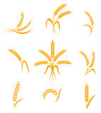 Abstract wheat ears icons Royalty Free Stock Images