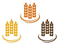 Abstract wheat ears. On white background with decorative line Royalty Free Stock Image