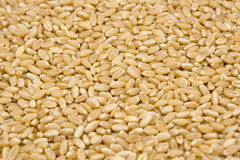 Abstract Wheat seeds Stock Photography