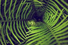 Abstract whirlwind closeup perspective of green fern leaves nature background. Abstract whirlwind closeup perspective of green fern leaves nature background Royalty Free Stock Photo