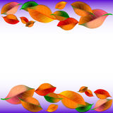 Abstract white background with colorful autumn leaves Royalty Free Stock Photos
