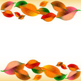 Abstract white background with colorful autumn leaves Stock Image