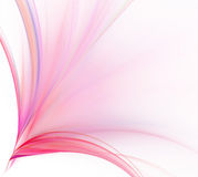 Abstract white background. Colorful explosion or bouquet of rose Royalty Free Stock Images