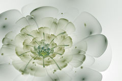Abstract white background with green and light grey flower in ba. Cklight texture, fractal pattern Stock Photography