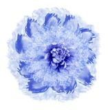 Abstract white-blue flower in watercolor style. Flower isolated on white background with clipping path. Close-up.For design, textu. Re, cover, postcard. Nature Royalty Free Illustration