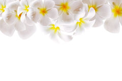 Abstract White Flower Background with Space Stock Photo