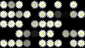 Abstract white flowers in rows on black stock video