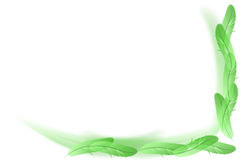 Abstract white -  green feathers background Stock Images