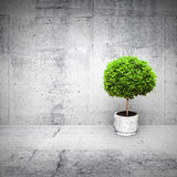 Abstract white interior with mall green tree Royalty Free Stock Photos
