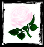 Abstract white rose Royalty Free Stock Photo