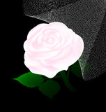 Abstract white rose and veil Royalty Free Stock Photography