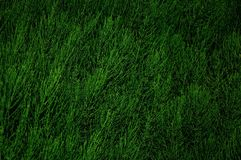 Abstract bush in green background horizontal Stock Photos