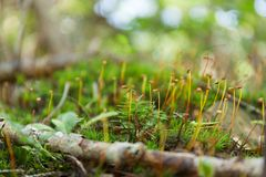Abstract wild forest grass background. Beautiful macro branch, bokeh.  royalty free stock photography