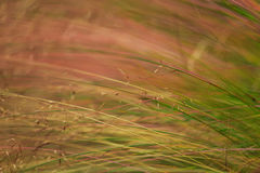 Abstract wild grass pattern Stock Photography