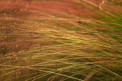 Abstract wild grass pattern Stock Images