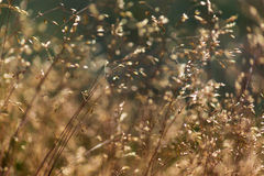 Abstract wild grass pattern Royalty Free Stock Photography